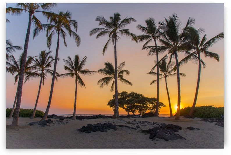 Sunset-Kissed Island Palms by Steve Luther