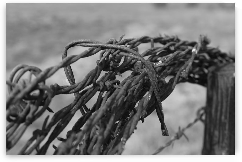 Barbed Wire by Matthew T Griggs