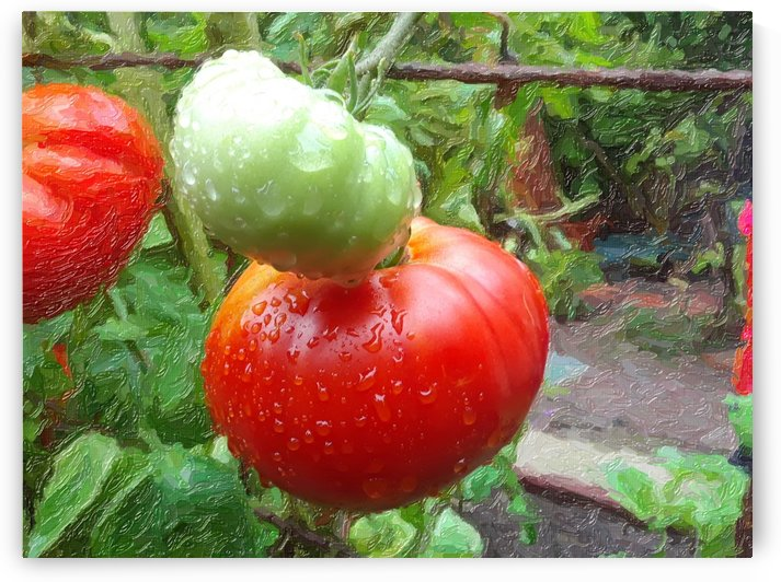Tomatoes After the Rains by CanvasBloom