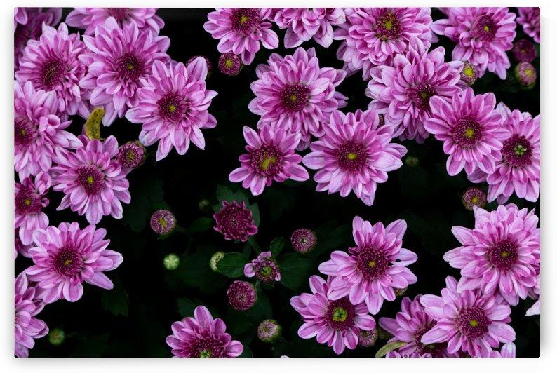 Purple flowre by Krit of Studio OMG