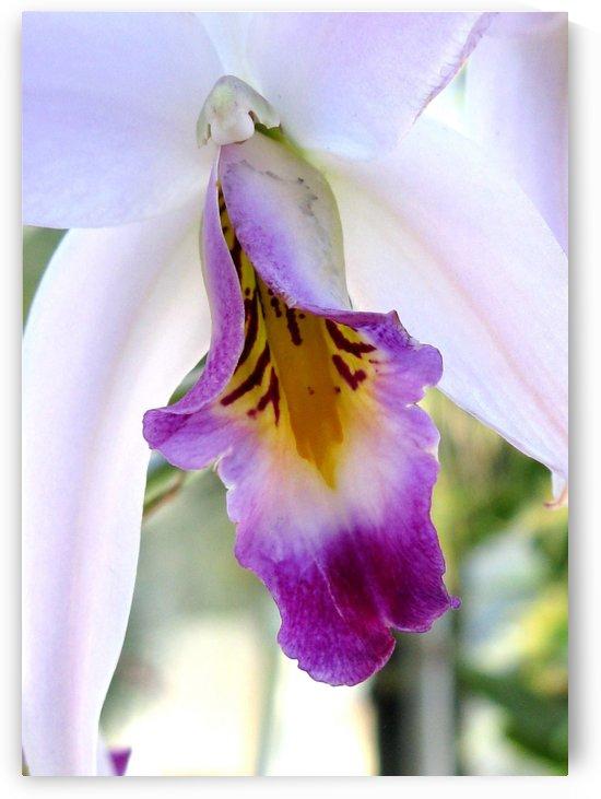 Orchid Poem by Olga Osi