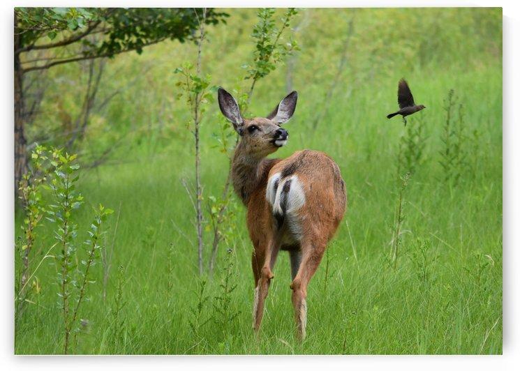 Deer Moment by Olga Osi