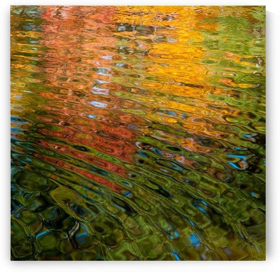 Water Palette I by Ricky A Richardson