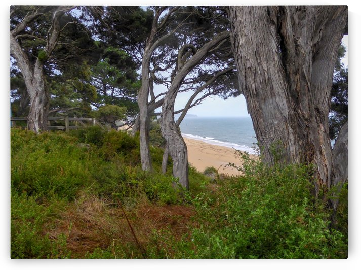 Ocean view through the trees by Fran Woods