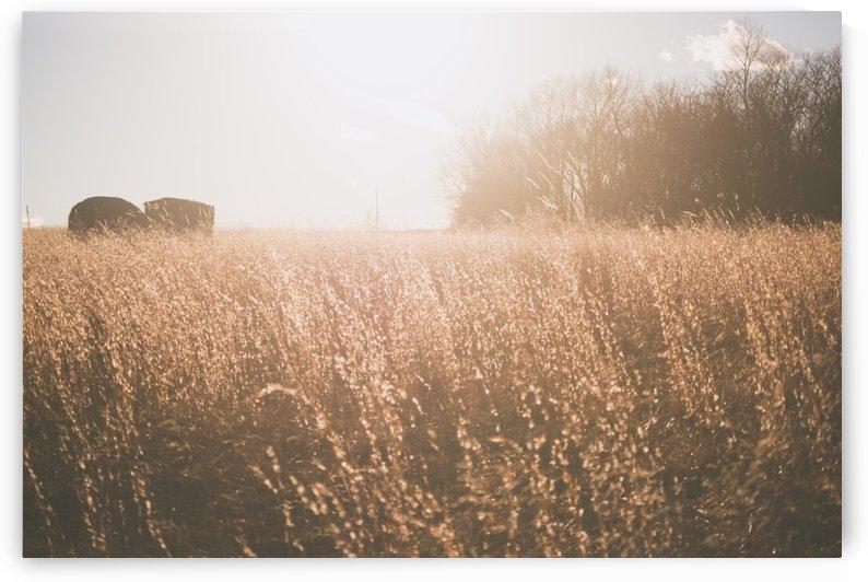 Farm Life by Tyler Feil