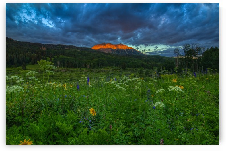 WILDFLOWERS AND MOUNTAIN MAJESTY by Bill Sherrell