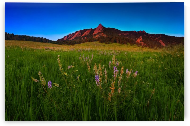 GLOWING FLATIRONS AND WILDFLOWERS by Bill Sherrell