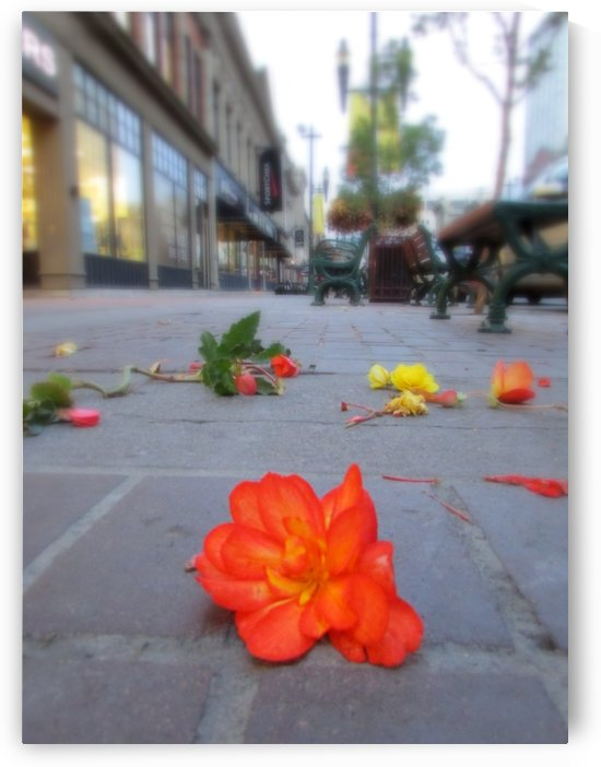 Street Flower by Olga Osi