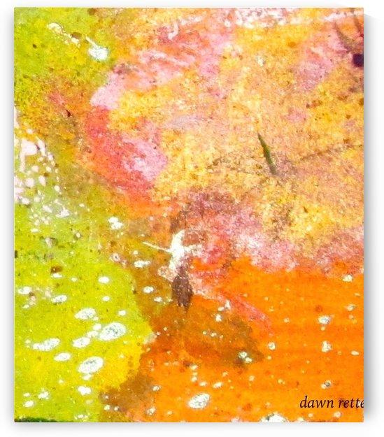 IMG_0423 2 by Dawn Rettew