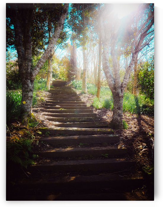 Garden Stairs by Suzanne Morgan