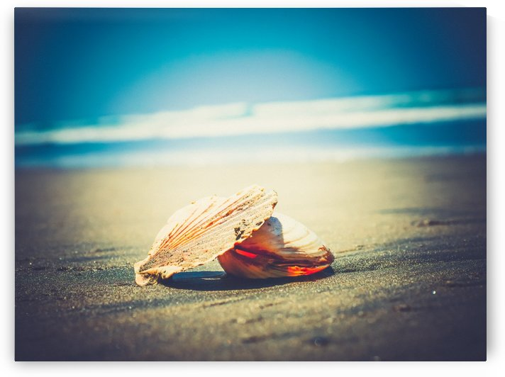 The Light in the Shell by Suzanne Morgan