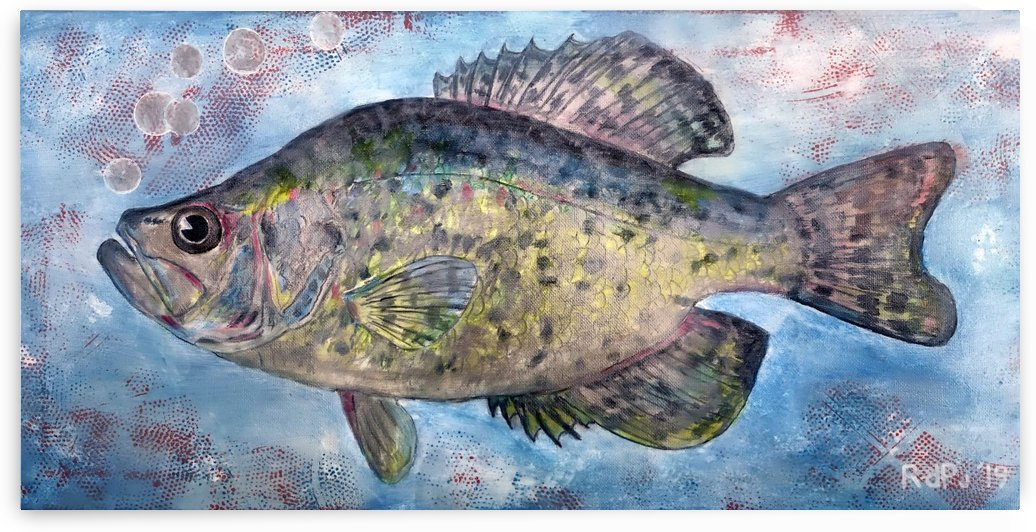 White Crappie Fish  by RDPJArt