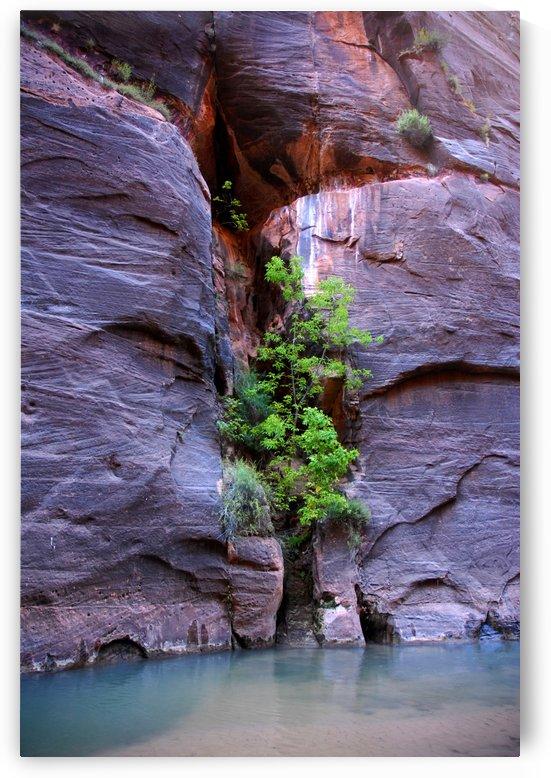 Utah Clear Pool by Senthia Sanders