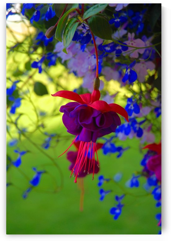 Hanging Flower by Senthia Sanders