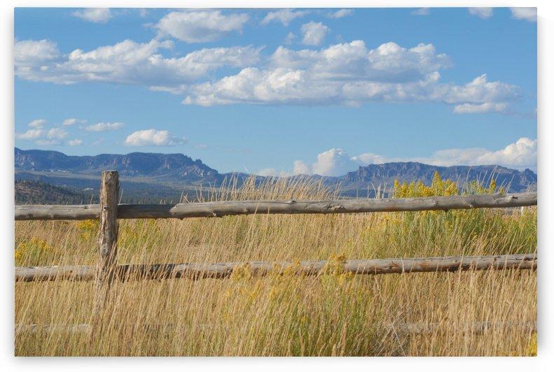 Fences by Senthia Sanders