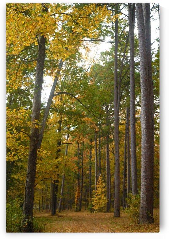 A Walk In The Woods by Senthia Sanders