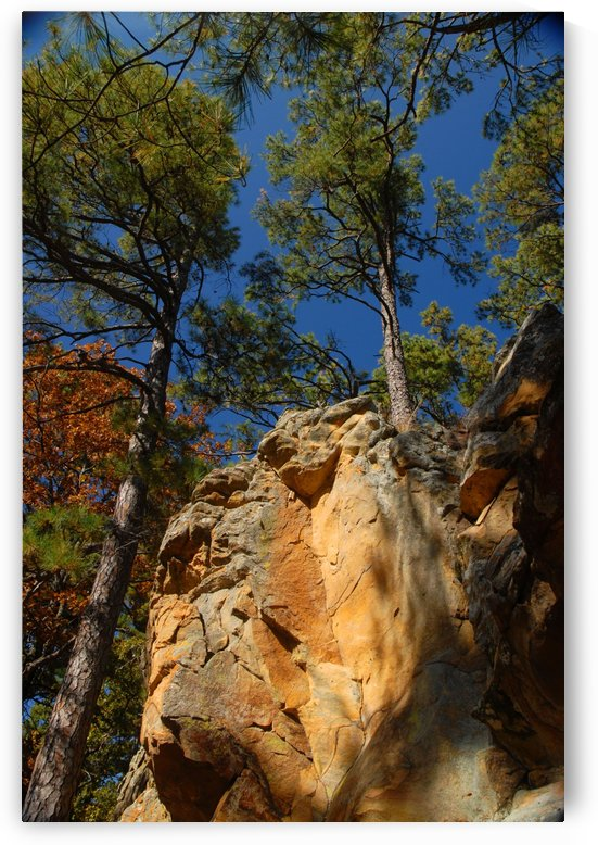 Tall Trees by Senthia Sanders