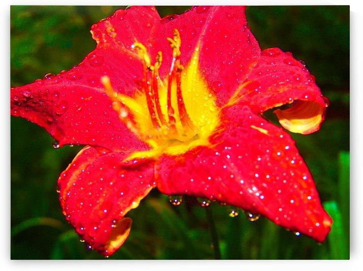 Red Flower Drops by Senthia Sanders