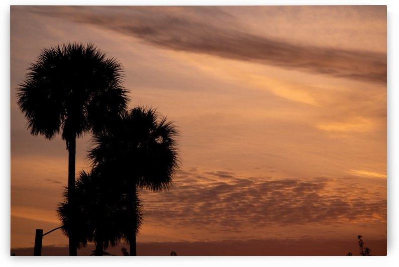 Palm Tree Sunrise by Skye