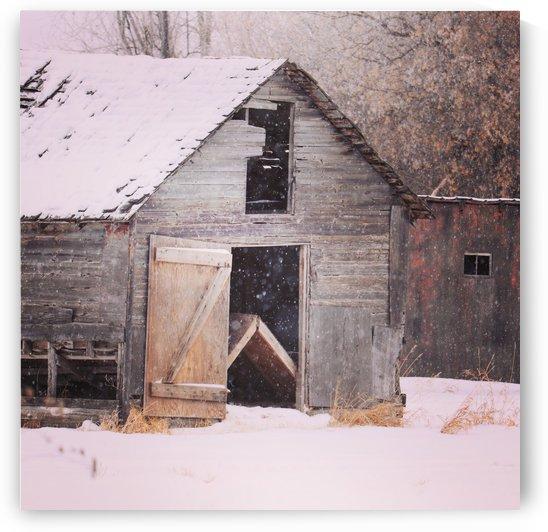 Barnboard by Crystal Robinson