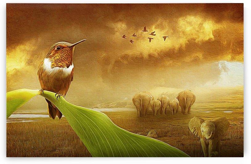 good morning hummbing brid by khaled Aljaber