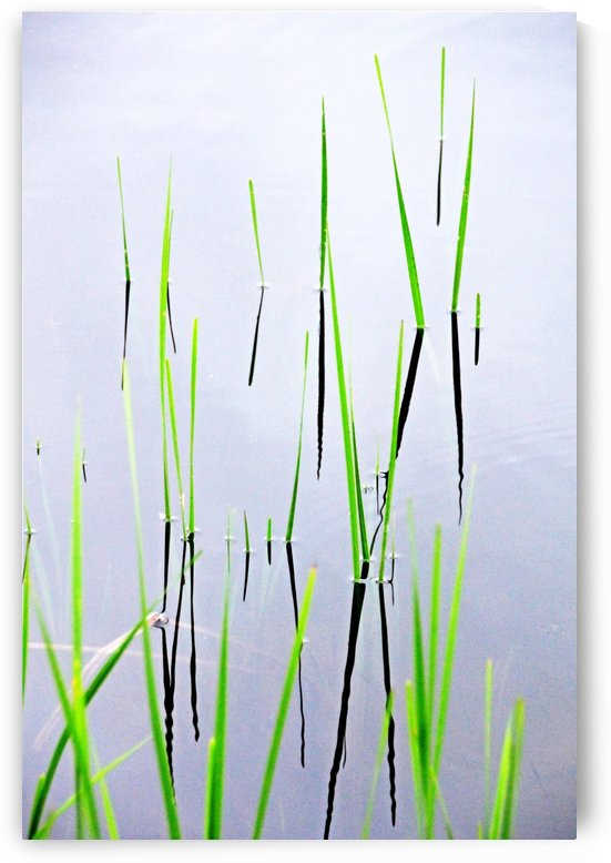 Aquatic Reeds Abstract by Deb Oppermann