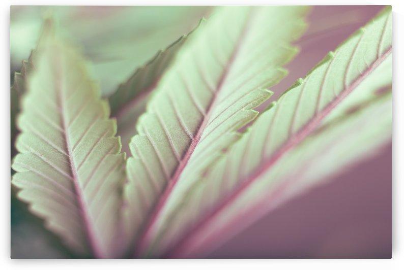 Marijuana Chromium by LionsJungle420Art