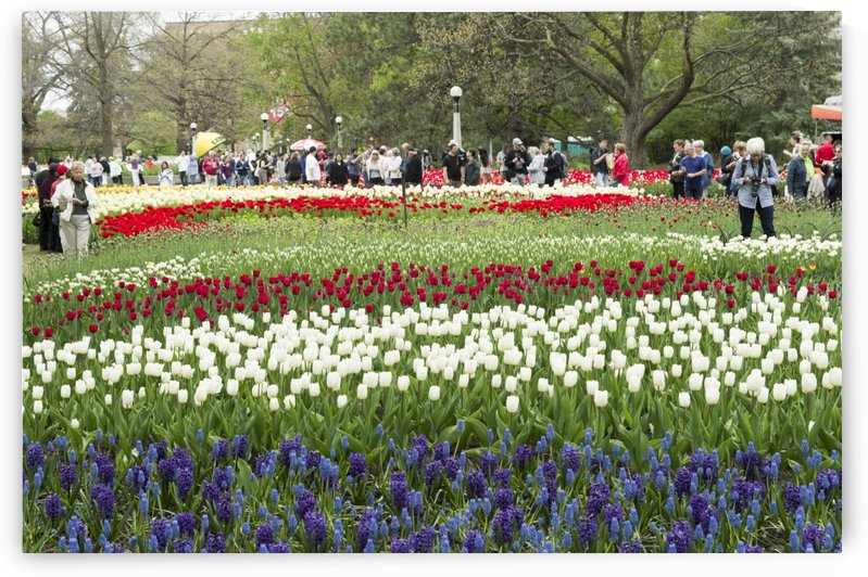 Ottawa Tulip Festival 7 by Bob Corson