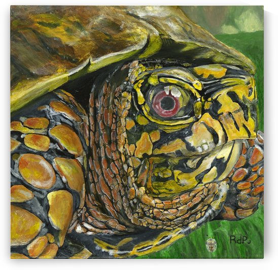 Box Turtle by RDPJArt