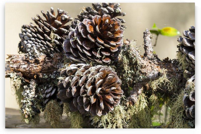 Arrangement of pine cones moss and lichen by Bob Corson