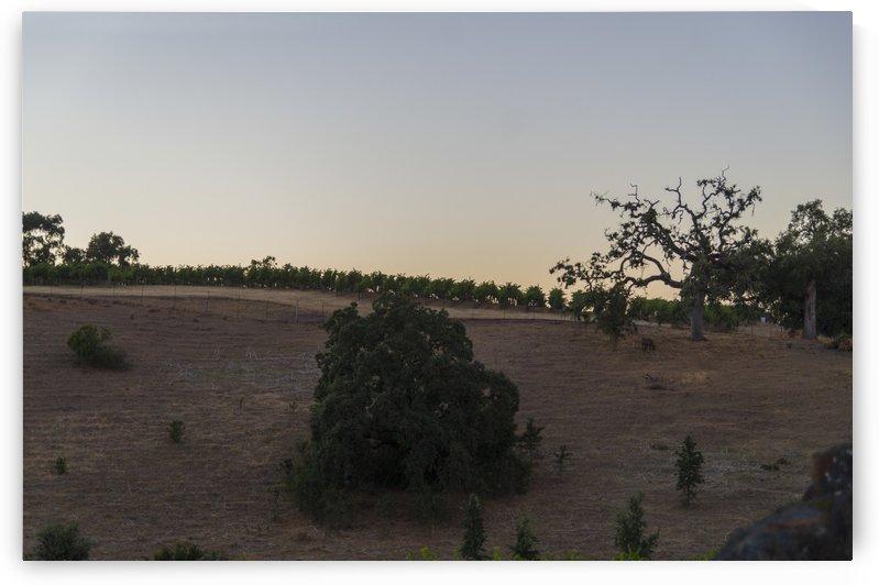 Sonoma County Sunset 3 by Bob Corson
