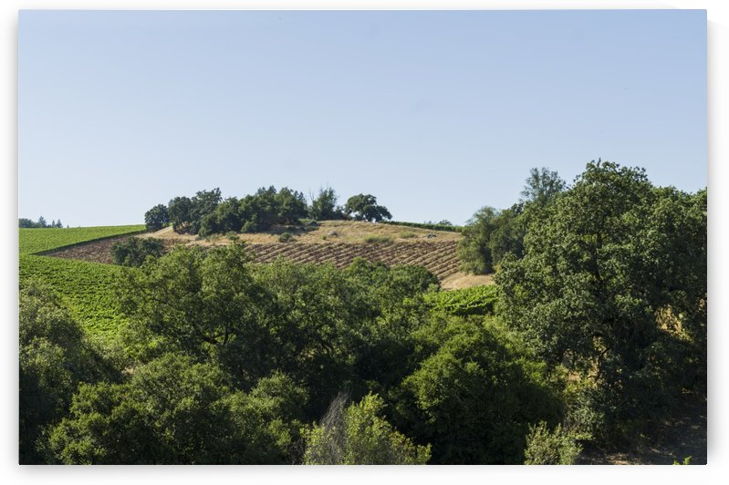 View from a Sonoma winery by Bob Corson