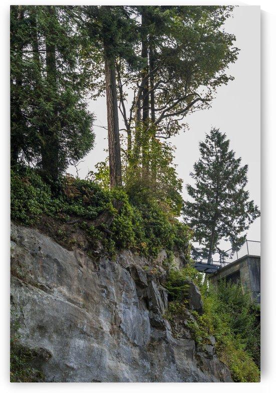 Stanley Park Trail 2 by Bob Corson