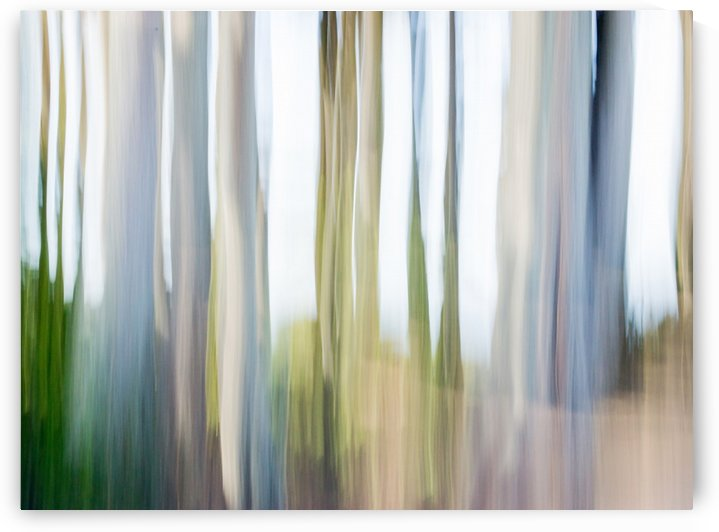 Moving Trees III 52 70 200px by Gene Norris