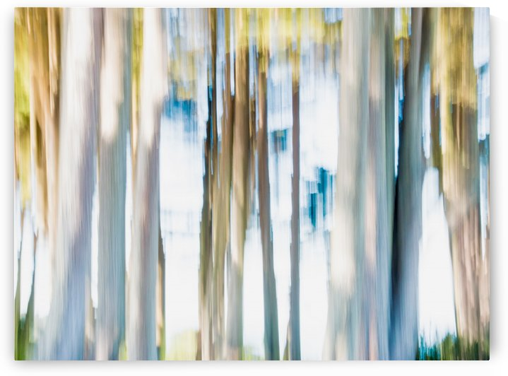 Moving Trees 02 Landscape Format 52-70 250px by Gene Norris