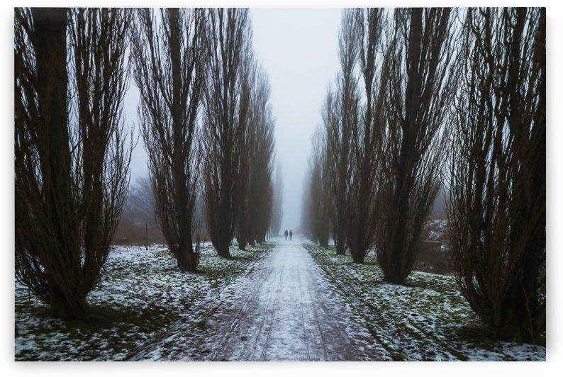 Symetric walk path in fog by Dalius Baranauskas