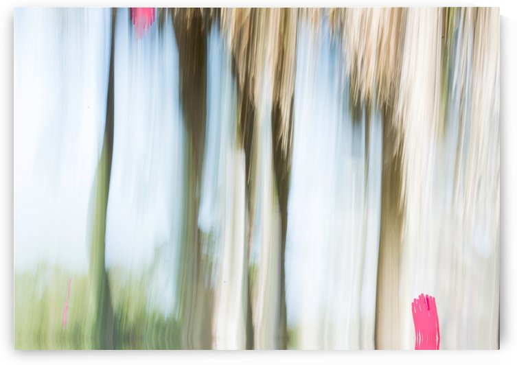 Moving Trees 15 Landscape 52 70 200px by Gene Norris