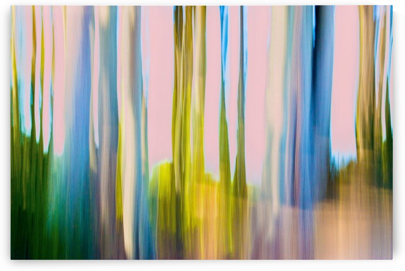 Moving Trees 19 Landscape 52 70 200px by Gene Norris