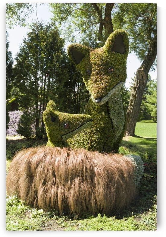 Prince Edward Islands entry: The Red Fox by Bob Corson