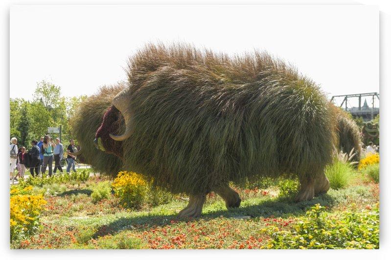 Northwest Territories entry: The Muskoxen 1 by Bob Corson