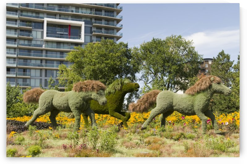 MosaïCanada 150 Display of horses 2 by Bob Corson