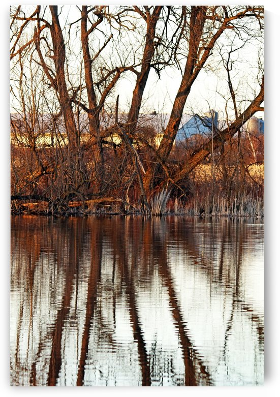 Sunset Tree Reflections With Barn by Deb Oppermann