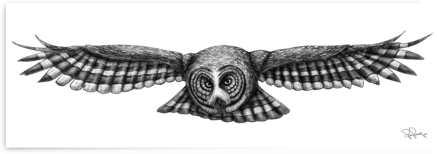 GREAT GREY OWL by P2