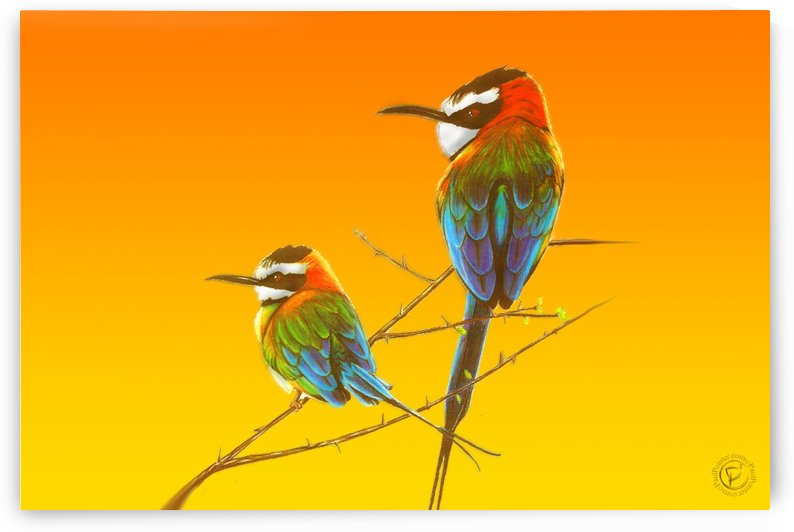 African Swallows (Wide) by P2