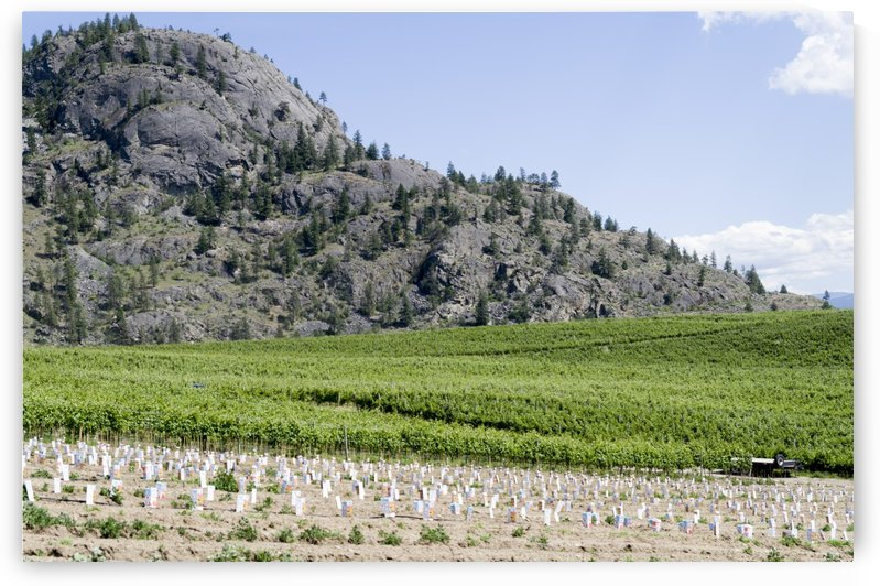 Okanagan Valley wine country 4 by Bob Corson