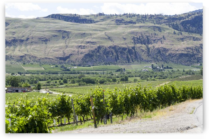 Okanagan Valley wine country 9 by Bob Corson