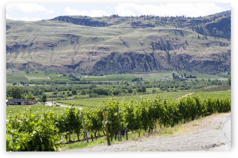 Okanagan Valley wine country 9 by Bob Corson