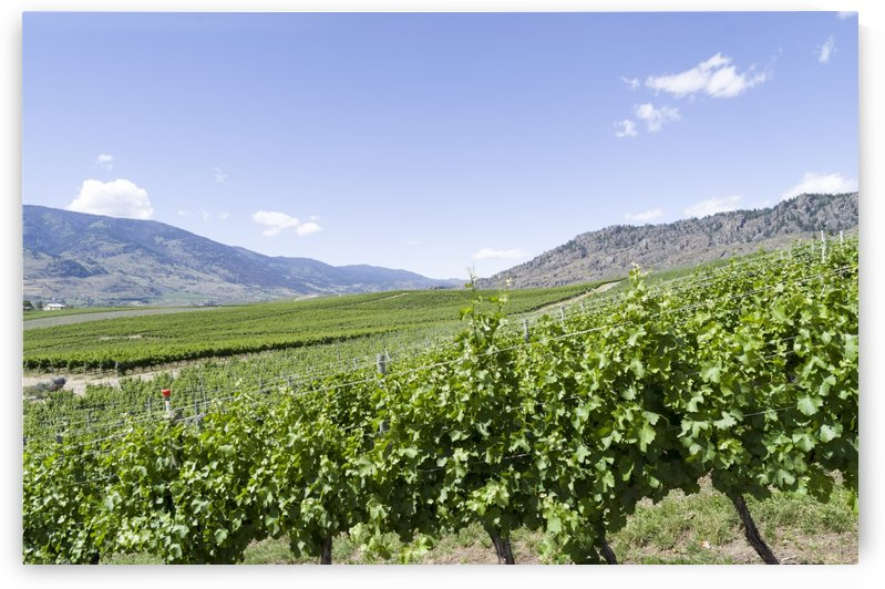 Okanagan Valley wine country 2 by Bob Corson