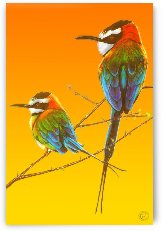 African Swallows (Tall) by P2