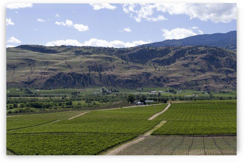 Okanagan Valley wine country 14 by Bob Corson
